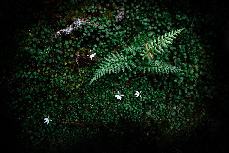 IMG_2569-sophie-narses-photographe-annecy-haute-savoie-book-shooting-portrait-geneve-mariage-suisse-famille-animaux-tirages-art-cours-photo-paysages-macro-fleurs-fineart-artiste-nature-canon