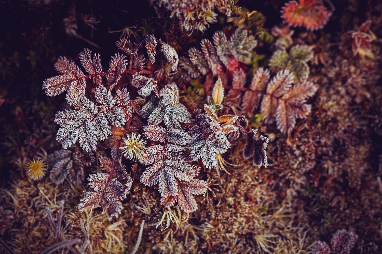 IMG_3665-sophie-narses-photographe-annecy-haute-savoie-book-shooting-portrait-geneve-mariage-suisse-famille-animaux-tirages-art-cours-photo-paysages-macro-fleurs-fineart-artiste-nature-canon