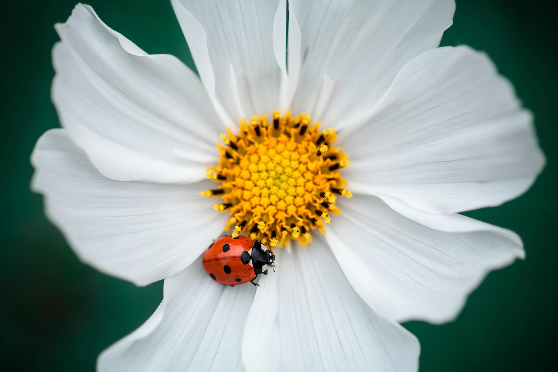 IMG_8601-sophie-narses-photographe-annecy-haute-savoie-book-shooting-portrait-geneve-mariage-suisse-famille-animaux-tirages-art-cours-photo-paysages-macro-fleurs-fineart-artiste-nature-canon