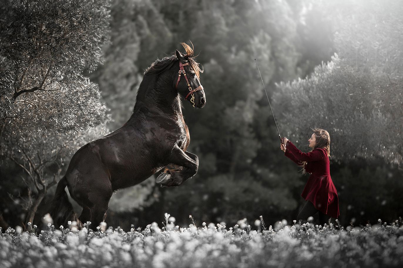 SNIMG_0470-sophie-narses-photographe-annecy-haute-savoie-book-shooting-portrait-geneve-cheval-suisse-cavalier-animaux-tirages-art-equestre-photo-modele-artiste-rhone-alpes-france