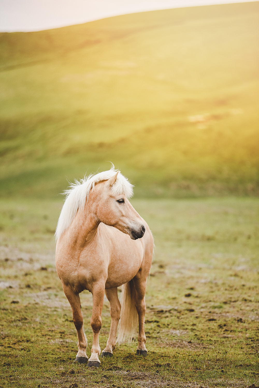 IMG_4223-sophie-narses-photographe-islande-voyage-aventure-book-shooting-portrait-geneve-mariage-suisse-famille-animaux-tirages-art-cours-photo-paysages-canon