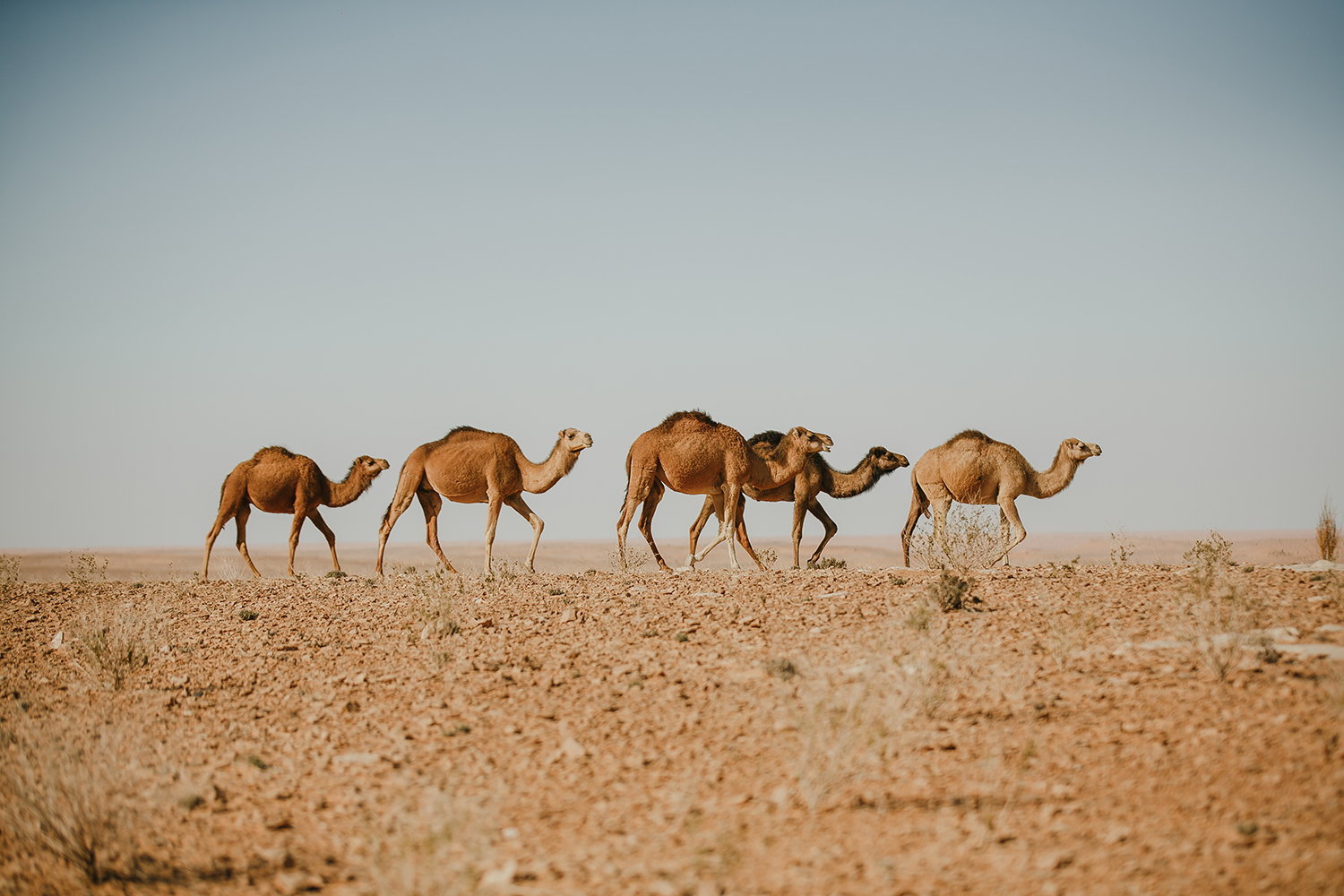 SN2_1116-sophie-narses-photographe-Tunisie-Voyage-book-shooting-geneve-mariage-suisse-famille-animaux-tirages-art-cours-photo-paysages-desert