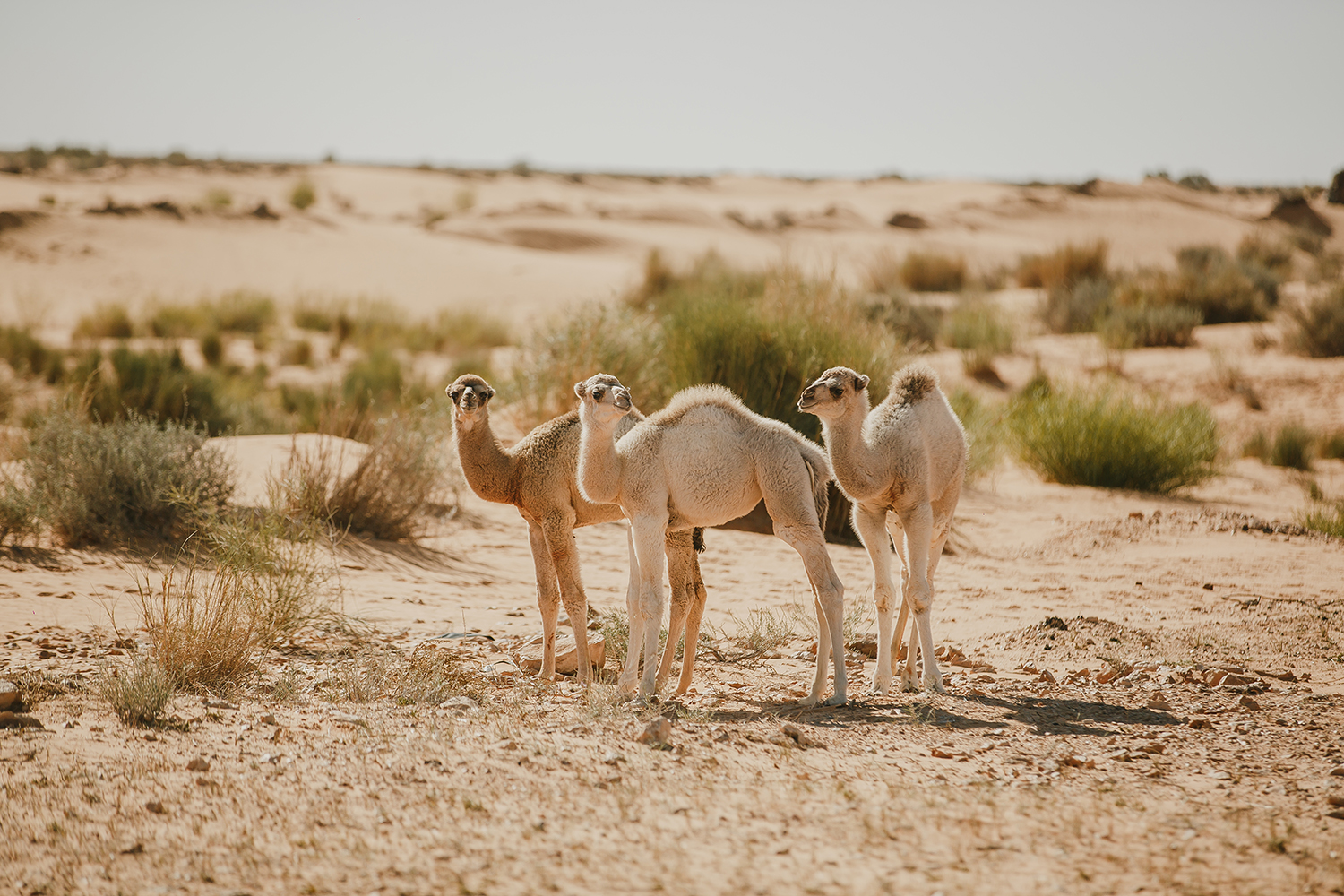 SN2_1394-sophie-narses-photographe-Tunisie-Voyage-book-shooting-geneve-mariage-suisse-famille-animaux-tirages-art-cours-photo-paysages-desert