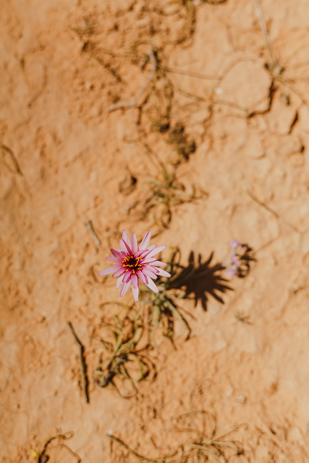 SN2_1530-sophie-narses-photographe-Tunisie-Voyage-book-shooting-geneve-mariage-suisse-famille-animaux-tirages-art-cours-photo-paysages-desert