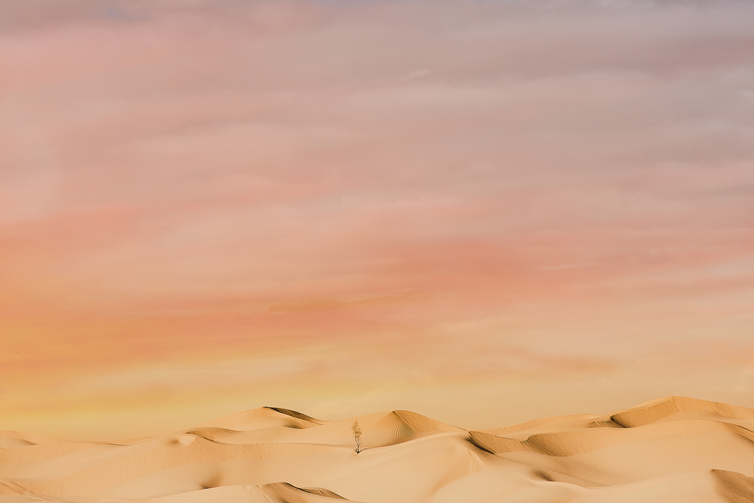 SN_0697-sophie-narses-photographe-Tunisie-Voyage-book-shooting-geneve-mariage-suisse-famille-animaux-tirages-art-cours-photo-paysages-desert